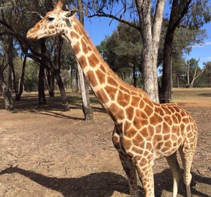 Buildingwise Inspections – Dubbo Zoo
